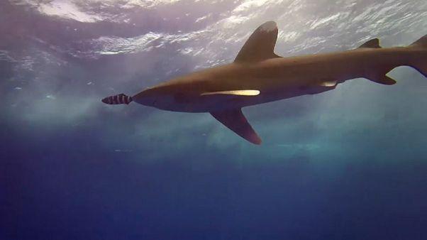 Réchauffement climatique : les océans aussi suffoquent