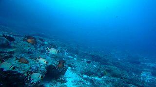 El cambio climático reducirá el oxígeno de los océanos hasta un 4% en 2100