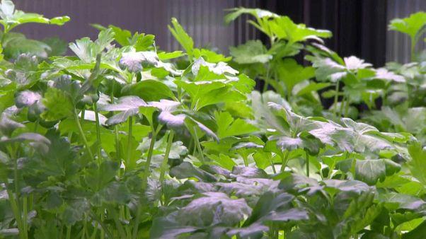 Salat, der im Supermarkt wächst