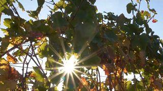 Los vinos buscan altura para capear el cambio climático