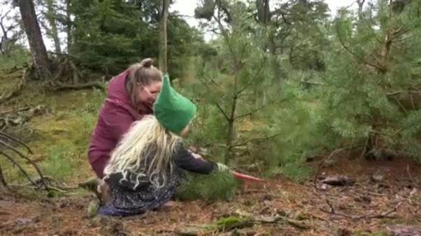 Au Pays-Bas, pour sauver ce parc, il faut abattre les sapins