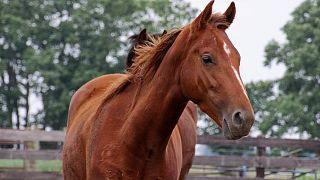 Sarhoş olduğu halde otobanda at binen bir kişi gözaltına alındı
