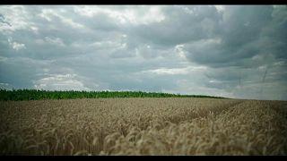 Почва Венгрии теряет плодородие