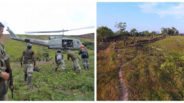 Περού: Κατέστρεψαν παράνομες καλλιέργειες κόκας σε εκτάσεις 250.000 στρεμμάτων