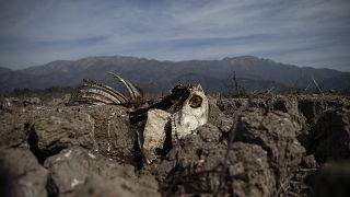 Chile: sequía histórica y funesta en un país con el agua privatizada