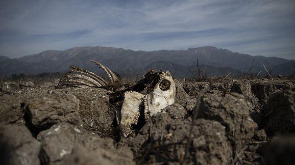 Chili: sécheresse historique et terrible dans un pays où l'eau est privatisée
