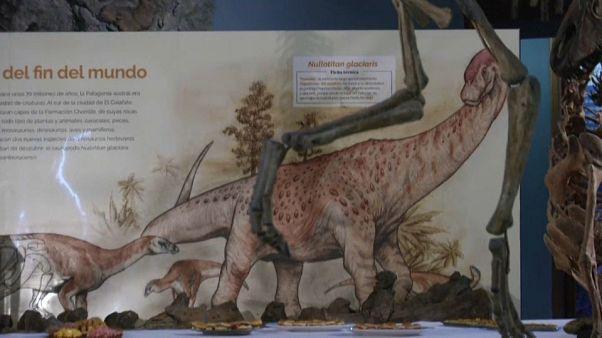 گونه جدیدی از دایناسورها در آرژانتین کشف شد