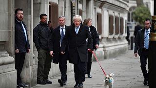 I britannici al voto, con i loro animali da compagnia