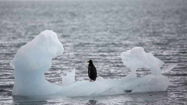 علماء المناخ: ذوبان القطب الجنوبي قد يؤدي إلى ارتفاع سطح البحر ثلاثة أمتار