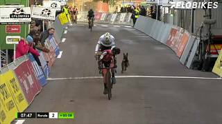 شاهد: كلب يهاجم المشاركين في سباق للدراجات ببلجيكا