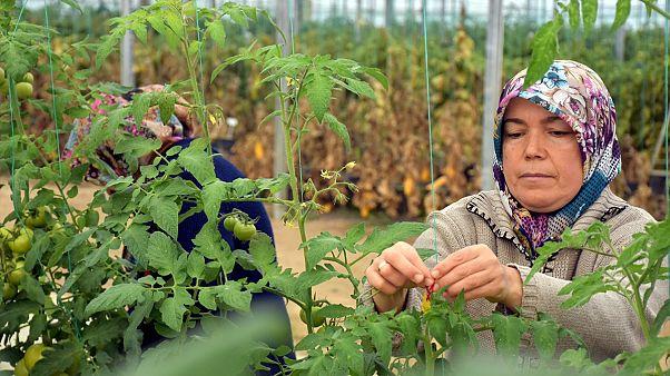Serada çalışan kadın işçiler