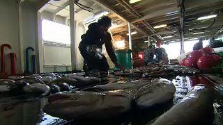 EU: megállapodás a halászati kvótákról