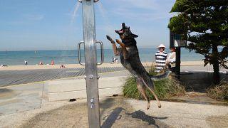 Hőhullám Ausztráliában – megdőlt a melegrekord, és akár 50 fok is lehet