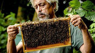 A méhek védelmében csökkentenék a növényvédő szerek használatát az EU-ban
