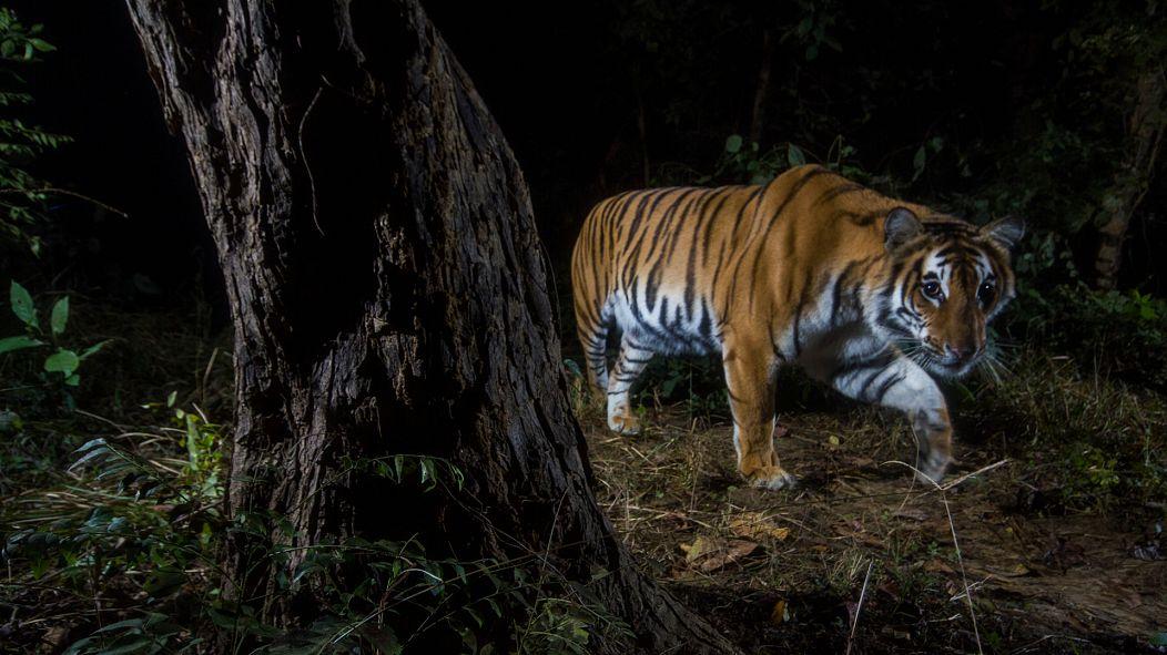 ©Emmanuel Rondeau / WWF-US