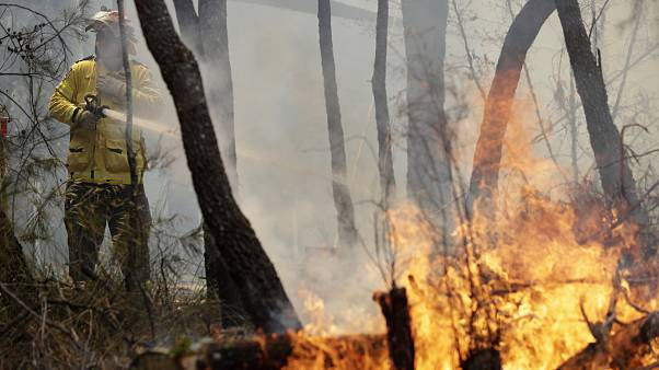 Sidney'in kuzeyinde yangına müdahale eden bir itfaiye personeli
