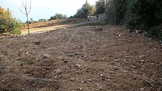 İtlaf edilen atlar kireç dökülerek gömüldü, Adalar