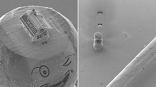 Megépítette a világ legkisebb mézeskalács házát egy kanadai tudós