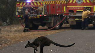 """Австралия: """"катастрофические"""" пожары"""