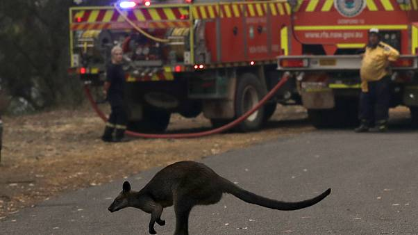 "Incendies en Australie : la situation ""catastrophique"" s'empire"