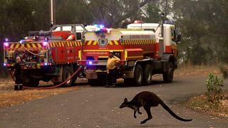 Video: Avustralya orman yangınlarıyla boğuşuyor: 10 kişi öldü, 3 milyon hektarlık alan kül oldu