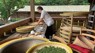 Buona la prima! Il Tè Nero del Verbano sbanca tutto in Cina