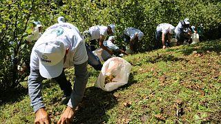 İtalyan çikolata üreticisinin, Türkiye'de fındık toplayan çocuk işçiler yüzünden başı dertte