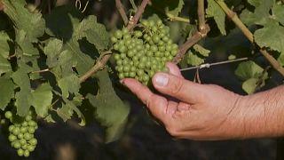 La clásica guerra de los vinos espumosos llega a Brasil