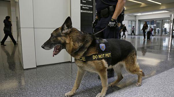ABD, sıcaktan öldükleri için Ürdün ve Mısır'a artık dedektör köpek göndermiyor