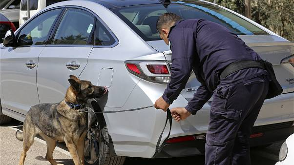 A three-year-old German shepherd trained in the United States sniffs for explosives in a drill at the K-9 compound of the Jordanian police
