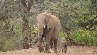 ELEPHANT-HUMAN RELATIONS AID