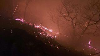 Trabzon'un Arsin ilçesinde ormanlık alanda çıkan yangın, kontrol altına alınmaya çalışılıyor