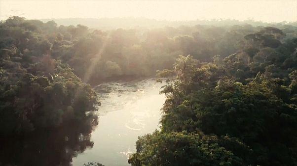 À la recherche du papillon disparu, en Centrafrique