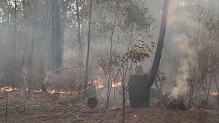 Avustralya'da Sydney'in su ihtiyacını karşılayan baraj, orman yangınları yüzünden tehdit altında
