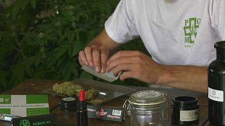 Italien legalisiert Cannabisanbau zu Hause