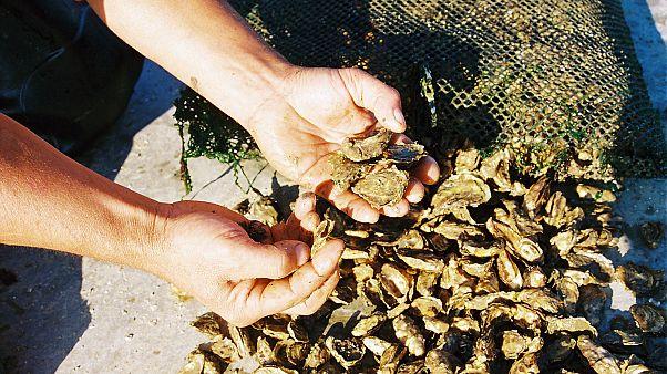 Austern: Weltkulturerbe muss zu Silvester auf den Tisch