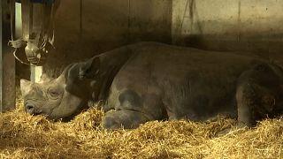 Купить зоопарк и освободить животных