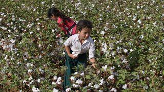 Şanlıurfa'da pamuk hasadında çalışan çocuk işçiler