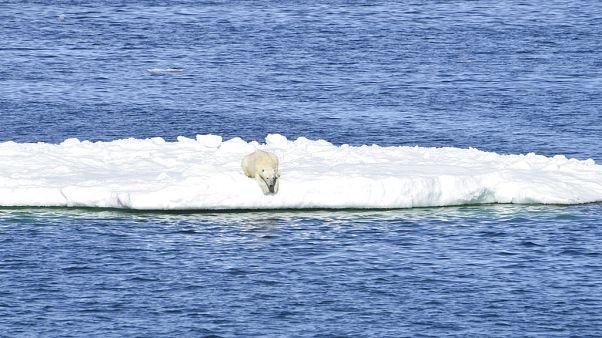 Rusya meteoroloji kayıtlarına yansıyan en sıcak yılını yaşadı