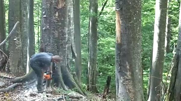 Terjed az illegális fakivágás Romániában