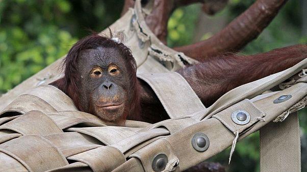 """""""Выживших нет"""" - при пожаре в немецком зоопарке погибли все обезьяны"""