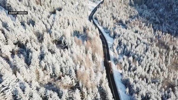Exploração ilegal de madeira na Roménia