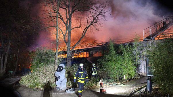 مأموران آتشنشانی در حال مبارزه با حریق باغ وحش کرفلد آلمان