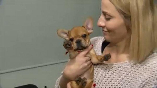 Kutyakölyök költözött a gyermek-hospice-házba