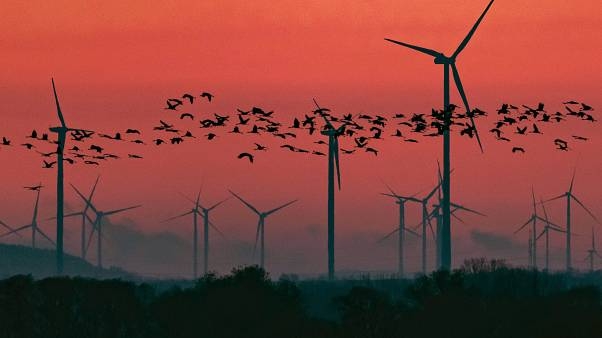 Alemania busca hacer atractiva la energía eólica ofreciendo subsidios