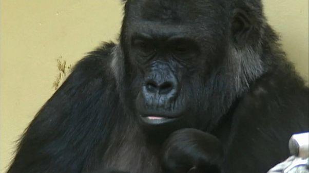 3 Frauen aus Krefeld für Tod von über 30 Zootieren verantwortlich