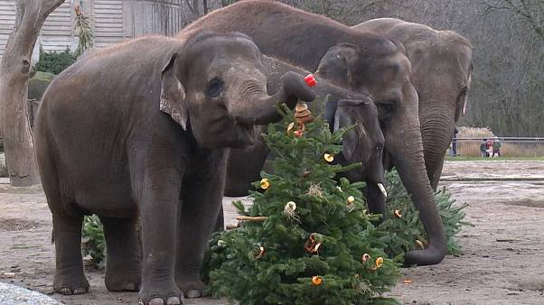 جشن کریسمس برای فیل و شتر و جوجهتیغی در برلین