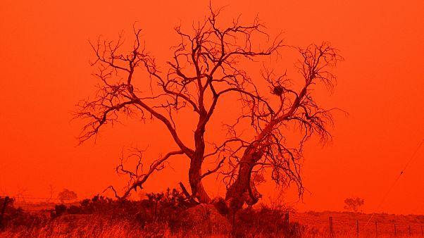 فيديو: حرائق أستراليا تغيّر لون سماء نيو ساوث ويلز... كأنها جهنم!