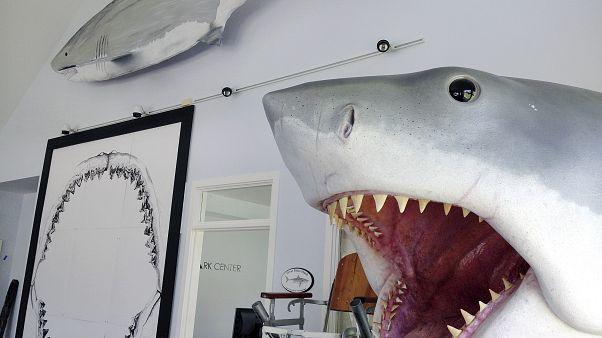 Avustralya'da okyanusa dalan bir kişi köpek balığına yem oldu