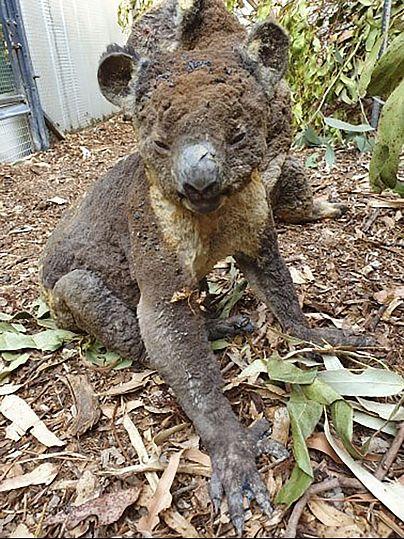 Dana Mitchell/Kangaroo Island Wildlife Park via AP